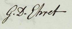Georg Dionys Ehret