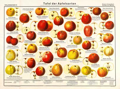 Tafel der Apfelsorten